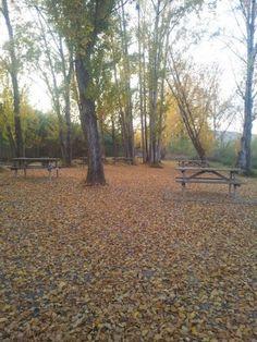 """Pilar (Soneja): """"Me produce un bienestar y una relajacion increible pasear por el rio en otoño y ves como caen las hojas de los arboles, formando un manto de color dorado a mis pies, me renueva por dentro y por fuera."""""""