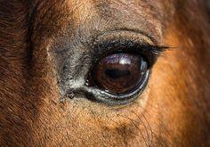 Sommerküche Quiz : 34 best petful animal quizzes images on pinterest animaux pets