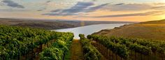 Oregon and Washington both offer top-quality wine at more affordable price points than many regions.