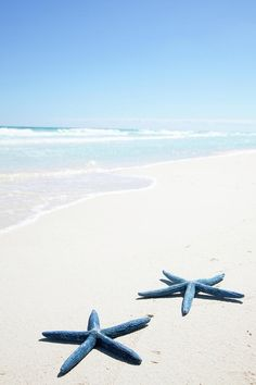 ☼ ☀ ร๏๏tђ ๓ץ ร๏ยl ☀ ☼ Beach starfish picture #beach #starfish