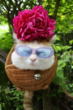 Does this cat follow Elton John I wonder?