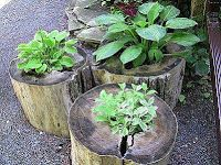 tree stump planters--portable little herb garden! Tree Stump Planter, Log Planter, Garden Planters, Tree Stumps, Planter Ideas, Wood Stumps, Rustic Planters, Wheelbarrow Planter, Tree Logs