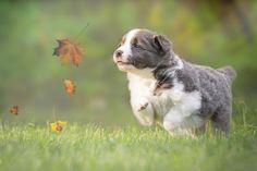 Der Herbst kommt - die schönste Jahreszeit für ein Fotoshooting mit Hund!