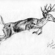 Resultado de imagen para small drawings nature