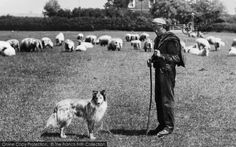 Oxford, Shepherd And His Dog, Cowley Road From The Francis Frith Collection, a privately-owned archive of over photographs of Britain from that you can browse online for free anytime. English Village, Working People, Photographs, Photos, Cornwall, Roads, Farming, Countryside, Britain