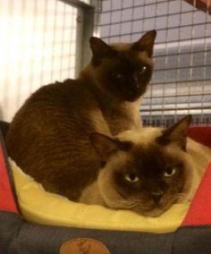 Dolly and Daisy cat boarding eastern suburbs