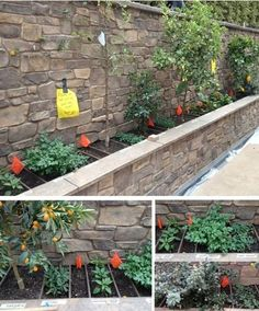 Lovely raised fruit and herb bed for your backyard patio/decking area. Do you have a space in your garden where this could work for you? Raised Vegetable Gardens, Veg Garden, Garden Edging, Edible Garden, Raised Garden Beds, Home And Garden, Border Garden, Raised Bed, Garden Pictures