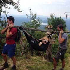 #Hammocks #Hammocklifestyle #JustHangIt #HammockViews #hikingtrail #wildernessculture #naturegram #hikemore