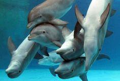 Dolphins #sea #dolphin