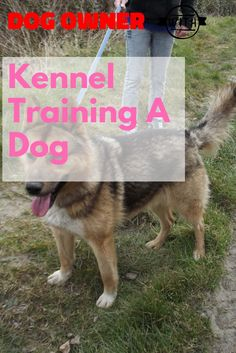 An Excellent Kennel Training A Dog Guide For You >>> Visit the image link for more details. Kennel Training A Dog, Crate Training, Dog Training Tips, Stress And Anxiety, Dog Owners, Crates, Stuff To Do, Have Fun, Image Link
