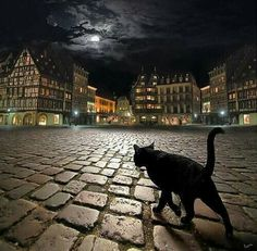 Cat in the plaza. Awesome photo.