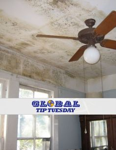 Most Common Places that #Mold Develops in a Home
