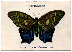 Vintage Image - French Butterfly #3 - The Graphics Fairy