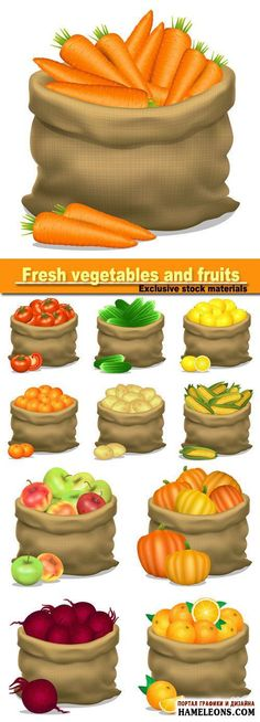 Illustration of a sack of apples corn potatoes cucumbers carrots on a white background vector icon Fitness Nutrition, Health And Nutrition, Recipe Book Templates, Carrots And Potatoes, Good Enough To Eat, Food Illustrations, Fresh Vegetables, Recipe Cards, Clipart