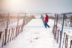 DIEFLEISCHEREI.AT | Weingut Wöber Snow, Outdoor, Wine, Outdoors, Outdoor Games, Outdoor Living, Eyes