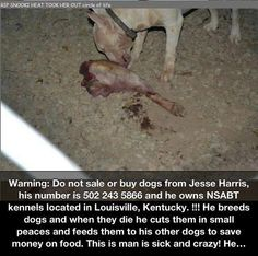 WARNING!!! Louisville, Kentucky!! JESSE HARRIS-phone #502-243-5866  This shit-sack is a puppy mill owner who abuses and tortures Doggies. When one of his Dogs dies, he carves them up and FEEDS THEM TO THE OTHER DOGS!!! Out this human filth, shout it out loud. This twisted piece of shit needs to be brought to task. How can this shit be legal?? This is an outrage. Any decent person should be disgusted by this ass-hole.Be a VOICE for those who can't speak,and be a HAMMER coming down on all…