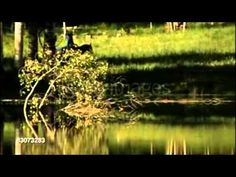 Abraham Hicks - Příběh záměrného tvoření - YouTube
