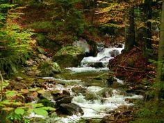 National Park Bayerischer Wald, Wilder Wald