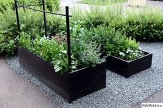 Garden boxes in gravel. Garden boxes in gravel. Potager Garden, Veg Garden, Vegetable Garden Design, Garden Boxes, Edible Garden, Raised Vegetable Gardens, Raised Planter, Garden Projects, Garden Inspiration