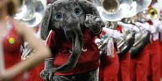 #12 on the ranking of college mascots from worst to best - University of Alabama: Big Al - Nothing about the Crimson Tide sports culture makes any sense. <--- so true...Aubie came in at #4 :)