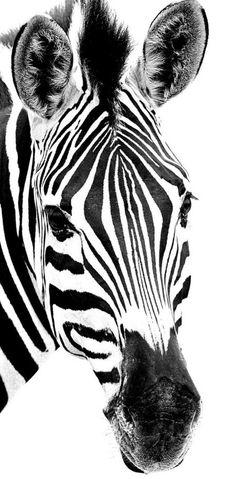 Zebra pinned with Bazaart