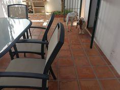 Ratos en casa con Benita, Greta, Milo, Monty y Penny 09/17