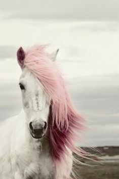 Pink. Tiere animals Pferd