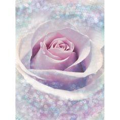 Fototapet Trandafir roz delicat acoperit de roua stralucitoare, ideal pentru decorari clasice sau Shabby Chic. Comanda Fototapet Trandafir roz pe traget.ro.