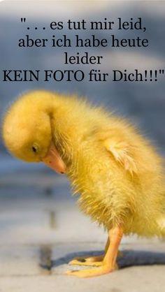 Brauchst Du vielleicht ein neues FOTO (!!!) für Dein Profil???