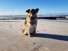 Paul als Windhund auf Sylt am Strand Marine Look, Strand, Winter, Dogs, Animals, Winter Time, Animales, Animaux, Doggies