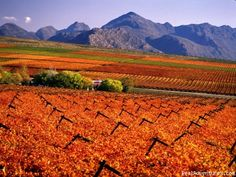 Specialized Wine and Day Tours, Stellenbosch, South Africa Sight-Seeing Tours Caves, South African Wine, Living In Europe, Cape Town South Africa, What A Wonderful World, Pictures To Paint, Day Tours, Wonders Of The World, Places To See