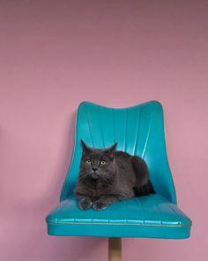 """77 curtidas, 4 comentários - Stephani Demczuk (@stephanidemczuk) no Instagram: """"Todo gato entediado tem seus dramas.  #familiafelina"""" Floor Chair, Dramas, Flooring, Animals, Furniture, Instagram, Home Decor, Cats, Animais"""