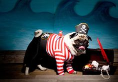 15 DIY costume ideas for grown-ups, kiddos, and four-legged friends.
