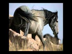Tribute to the Wild Mustang......the symbol of America's Strength