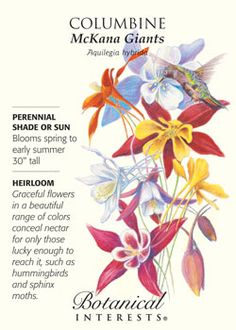 $1.79 Graceful flowers in a beautiful range of colors provide nectar for hummingbirds and sphinx moths. HEIRLOOM.