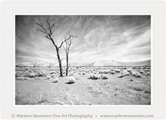 DESERTSCAPE....my latest black and white image...an unusual work. I find the simplicity of it gives me space to wonder. The baron desert landscape evokes a different emotion for each of us. For me it has a timelessness where i can get lost in it...do you enjoy it too would like to hear your feelings...Love Marlene Different Emotions, Desert Landscape, Winter Trees, White Image, Baron, Timeline Photos, Fine Art Photography, Photographs, Lost