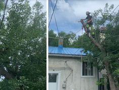 Edmonton Arborist - Tree Removal is one of the most reputable arborists in Canora. They provide a wide range of tree and plant care services to our customers. Plant Care, How To Remove, Range, Plants, Cookers, Plant, Planets