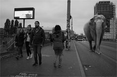 Elephant. The Zoo on our Streets, Black and White Photography. To see more art and information about Ceslovas Cesnakevicius click the image.
