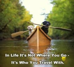 It's not where you go, it's who you go with. Camping. Outdoors. Dogs.
