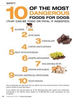 10 of the Most Toxic Foods for Dogs- keep our pets safe, especially with all of this holiday food around! Toxic Foods For Dogs, Dangerous Foods For Dogs, Human Food For Dogs, Fruits For Dogs, Dog Eating, Food Safety, Safety Tips, Vizsla, Pet Health