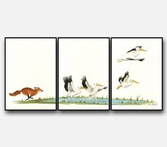 PRINT- Fox with White Pelicans - seabirds wildlife animal decor- Pelican & Fox animal wall art - sea birds decal- Art Print by Juan Bosco
