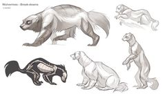 A bit rushed this time, so they're kind of sloppy. Meet the wolverine, the bear of the weasel family. Wolverine Animal, Wolverine Art, Animal Sketches, Animal Drawings, Art Drawings, Animal Anatomy, Creature Drawings, Sketch Inspiration, You Draw