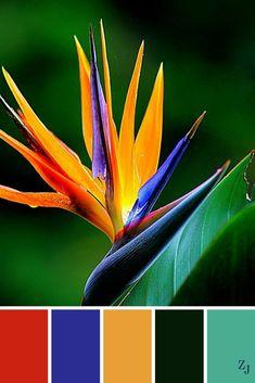 Tropical Birds Of Paradise Palette. Color Schemes Colour Palettes, Colour Pallette, Color Palate, Color Combos, Color Blending, Color Mixing, Decoration Palette, Motif Tropical, Tropical Birds