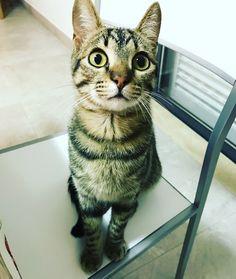 Meu bebé ❤️ Guguinha