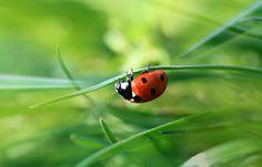 ladybird by Hajnalka Farkas