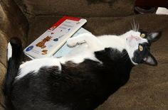 """Anotación sobre «O meu gato é un poeta», de Fran Alonso, en Redelectura, o blog da Asesoría das Bibliotecas Escolares de Galicia: A piques de celebrar un novo día da poesía, un libro para disfrutar xogando coa lingua, coas verbas, mestura de brincadeira e seriedade; un libro reivindicativo, non só da poesía, tamén do xogo, da actualidade, do amor, do cambio… e ata de """"acción poética"""". Un libro que acolle un amplo espectro de idades…"""