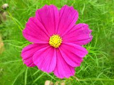 A beleza das flores com hinos CCB Instrumental - Cod. 7 J