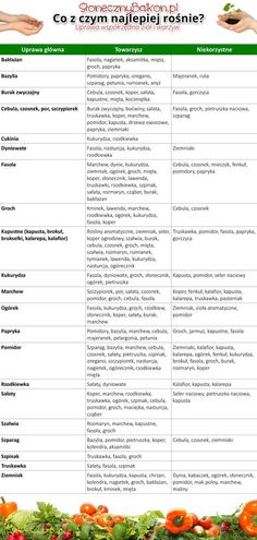 Uprawa współrzędna warzyw i ziół Vegetables and herbs companion planting Hydroponic Gardening, Organic Gardening, Container Gardening, Gardening Tips, Container Vegetables, Planting Vegetables, Growing Vegetables, Herb Companion Planting, Starting Plants From Seeds