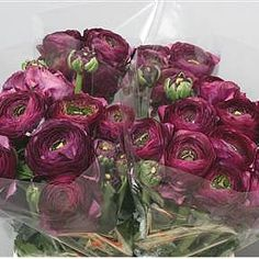 Ranunculus Cloony Nerone Ex, also known as little frog. 2018 Wedding Trend: Ultra Violet Purple. For lilac and purple wedding flowers to suit your colour scheme, visit our website at www.trianglenursery.co.uk/fresh-flowers!