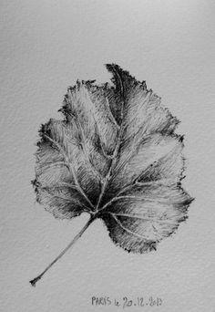 Branche feuilles de ch ne tatoo pinterest feuille - Dessin feuille morte ...